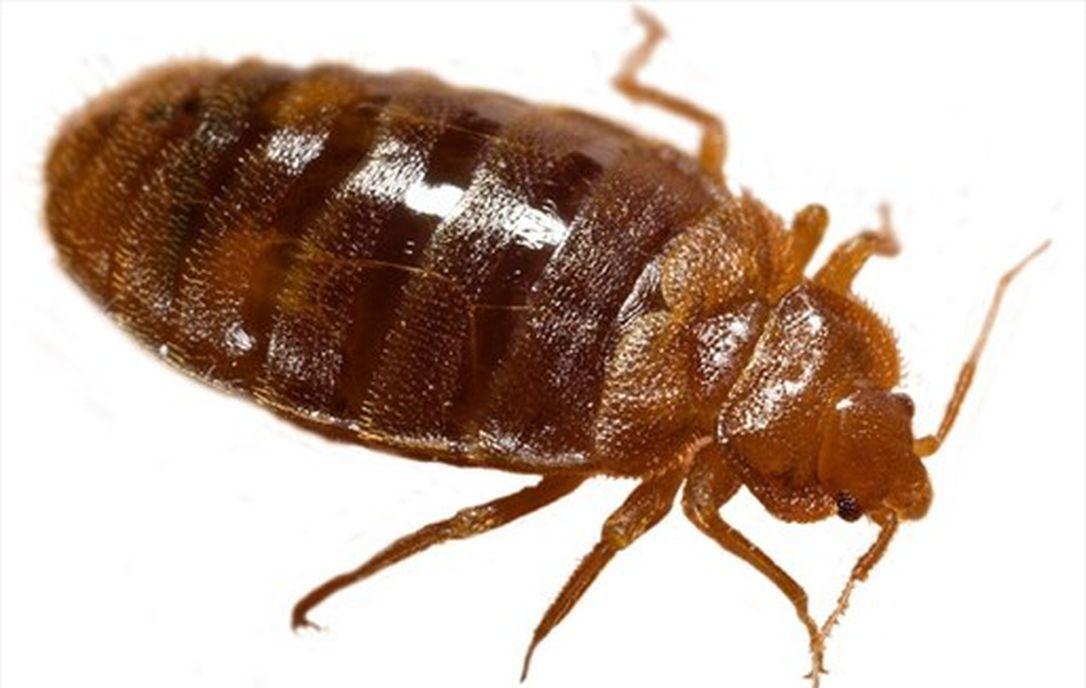5 raisons pour lesquelles vous voyez plus de bugs cet été